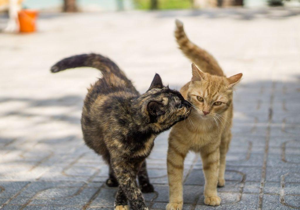 Таблетки для кошек от гуляния