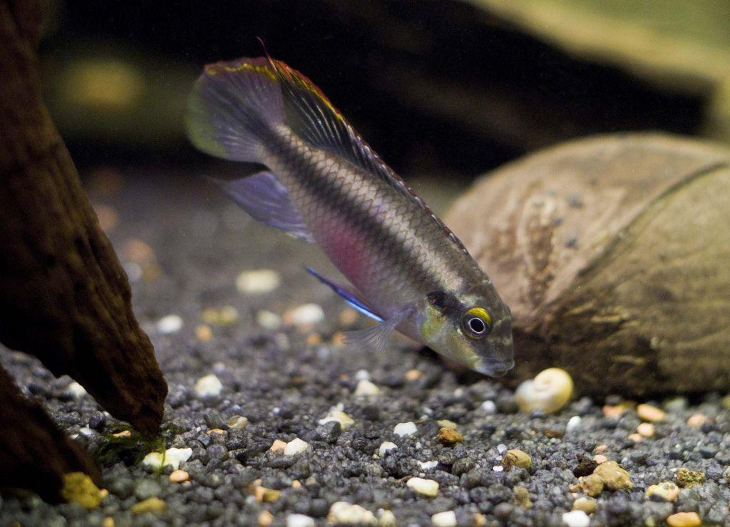 Рыбка ест со дна, поэтому пища должна быть соответствующей