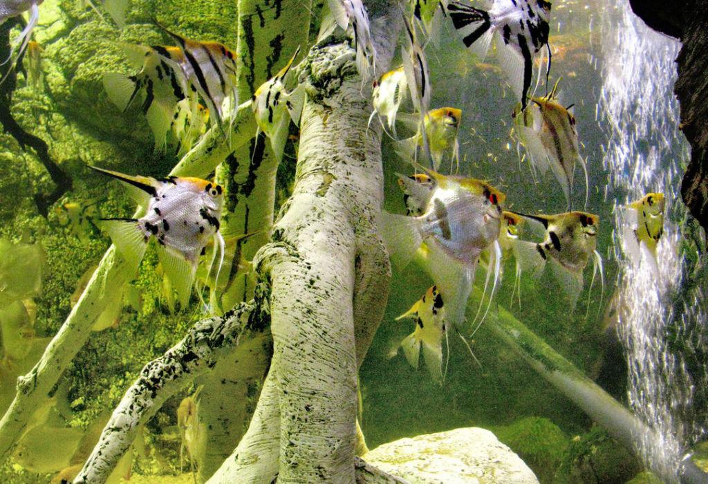 Основной причиной болезней рыб является их неправильное содержание