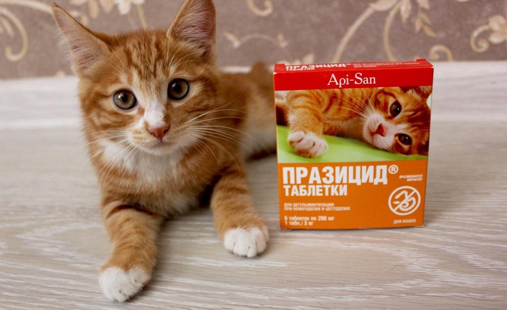 Подробная инструкция по применению таблеток празицид для кошек и собак