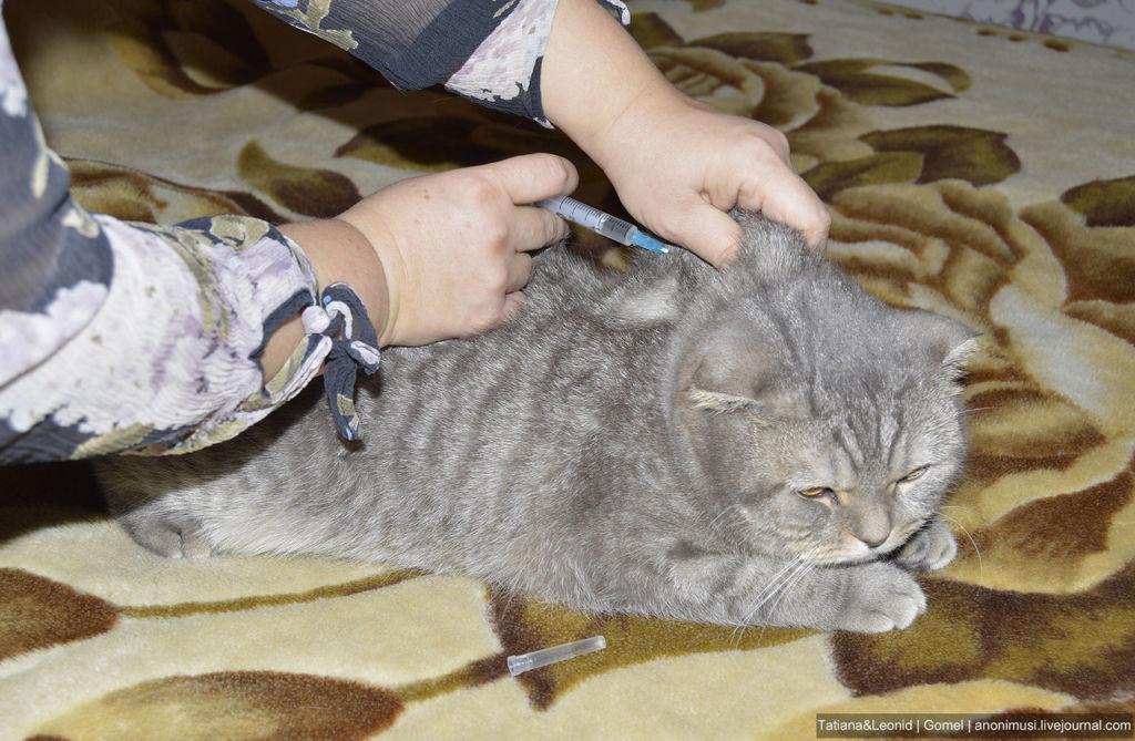 Облегчение болей у кошки с помощью Кетонала