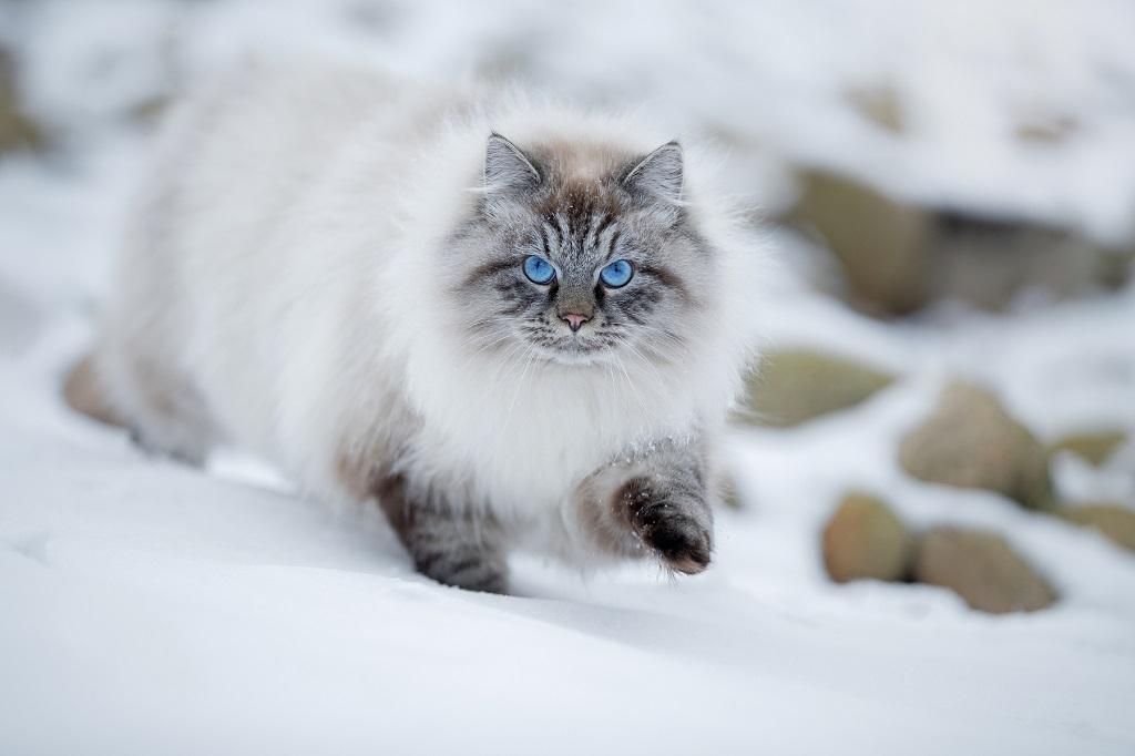 Невская маскарадная в снегу