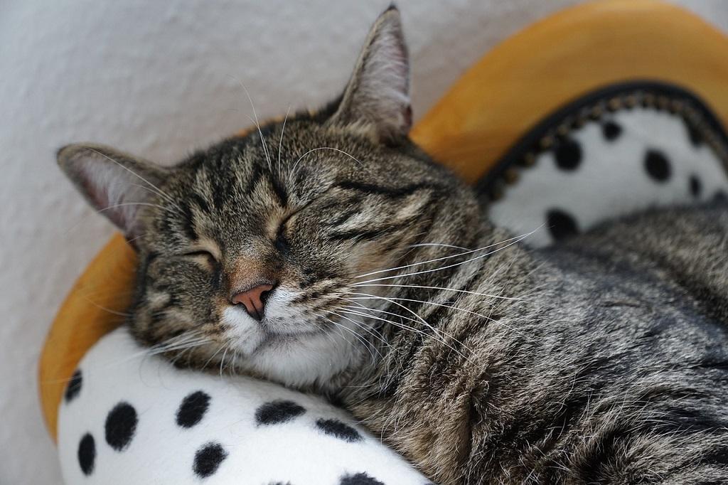 Капли стоп стресс для снижения возбуждения у кошек и собак