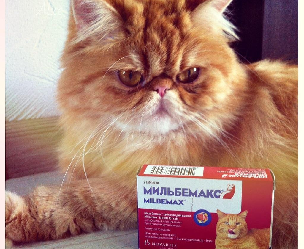 Таблетки мильбемакс - для здоровья вашего питомца
