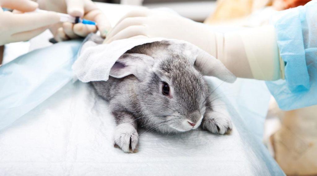 Препарат назначают для уничтожения эктопаразитов, подкожных клещей и круглых гельминтов у разных животных