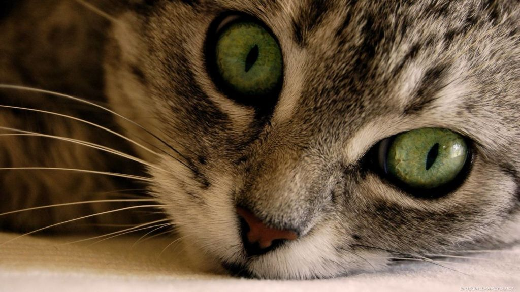 Последствием нелеченного крипторхизма может быть образование опухоли, который возрастает на седьмой или восьмой год жизни кота