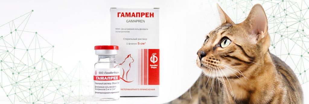 Гамапрен - для кошек с прямым противовирусным действием