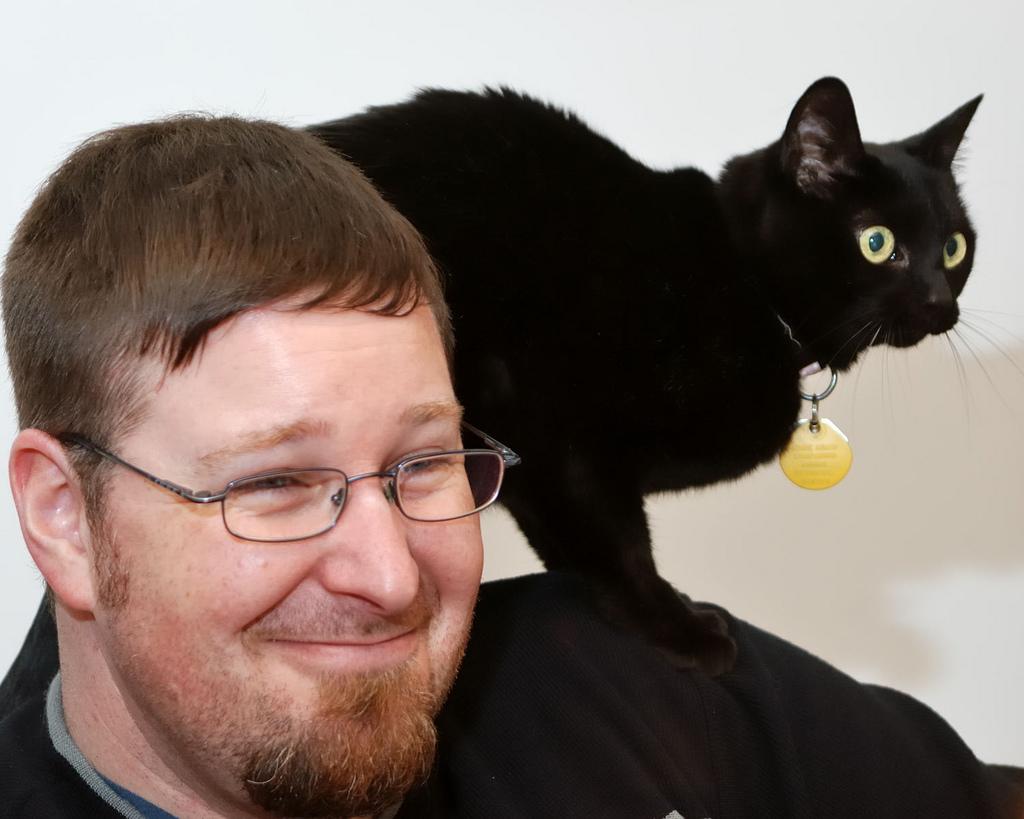 Кошки обычно привязываются к одному члену семьи