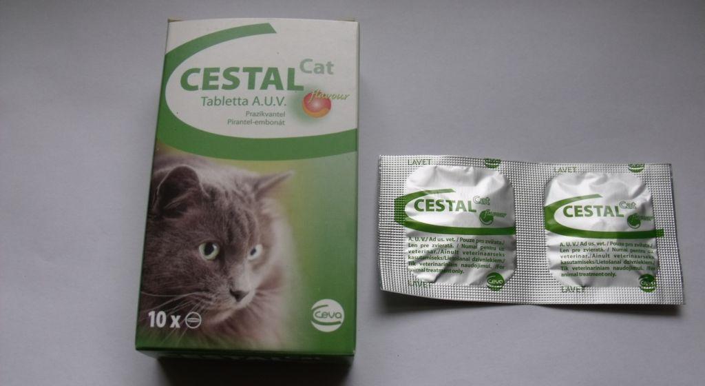 Цестал назначают индивидуально пропорциональна массе тела кошки