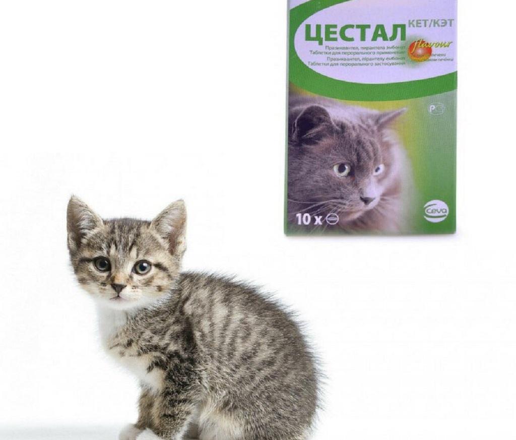 Цестал для кошек применяют с профилактической и лечебной целью при нематодозах и цестодозах