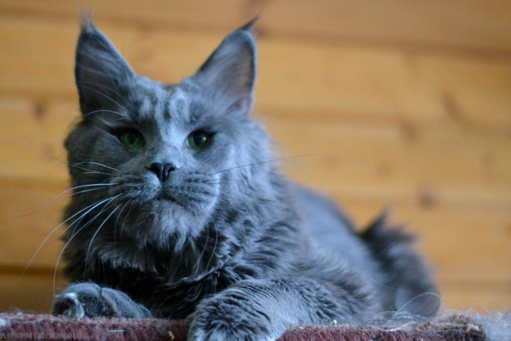 Раскосые глаза кошки