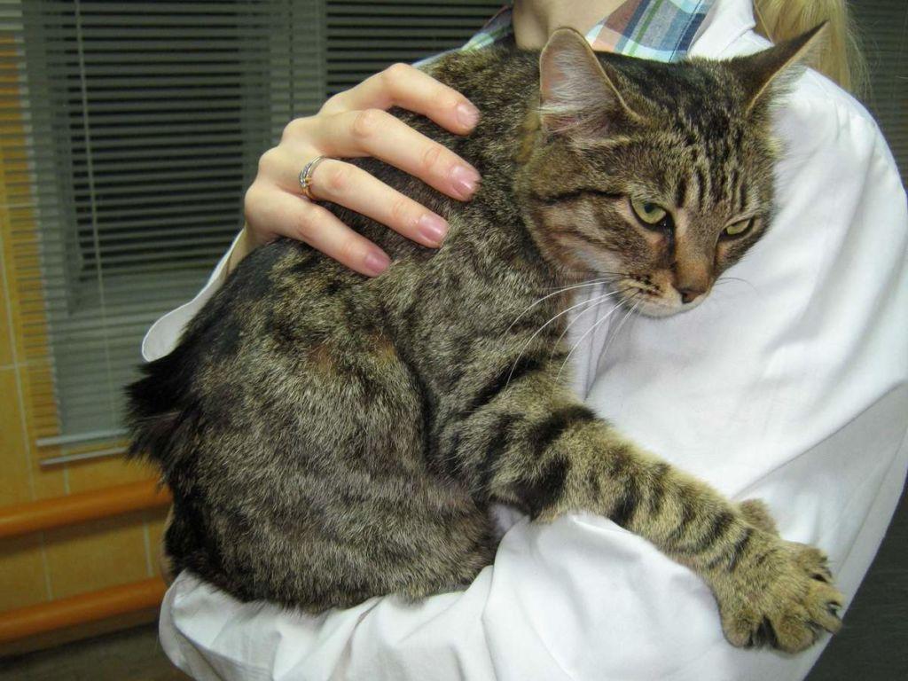 Признаки боли можно определить по необычному поведению животного