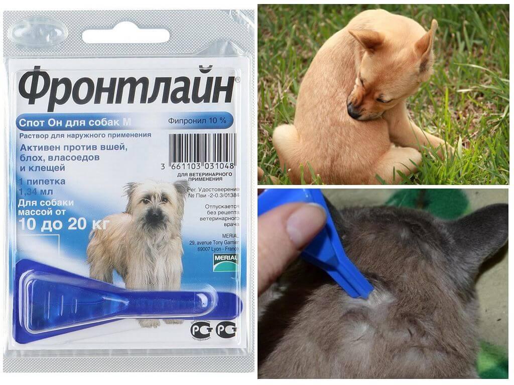 Препарат для собак
