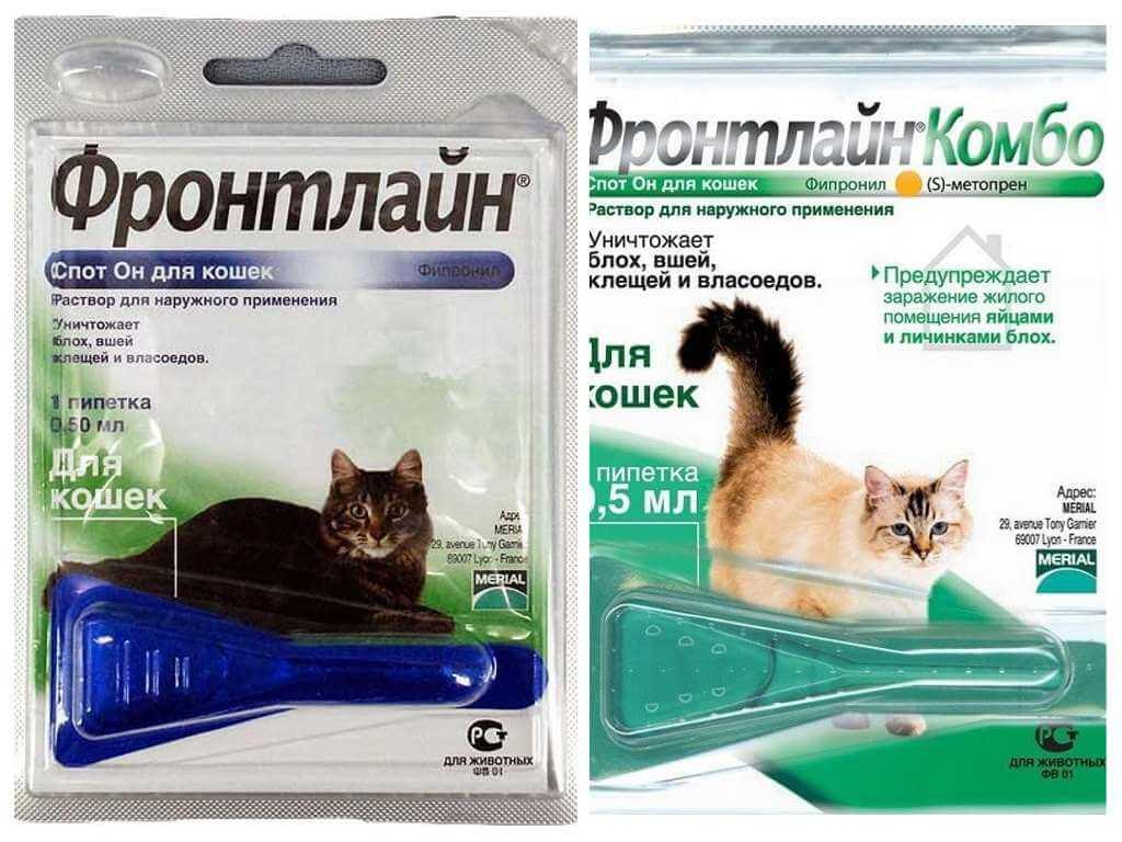 Полная инструкция по применению препарата фронтлайн для кошек