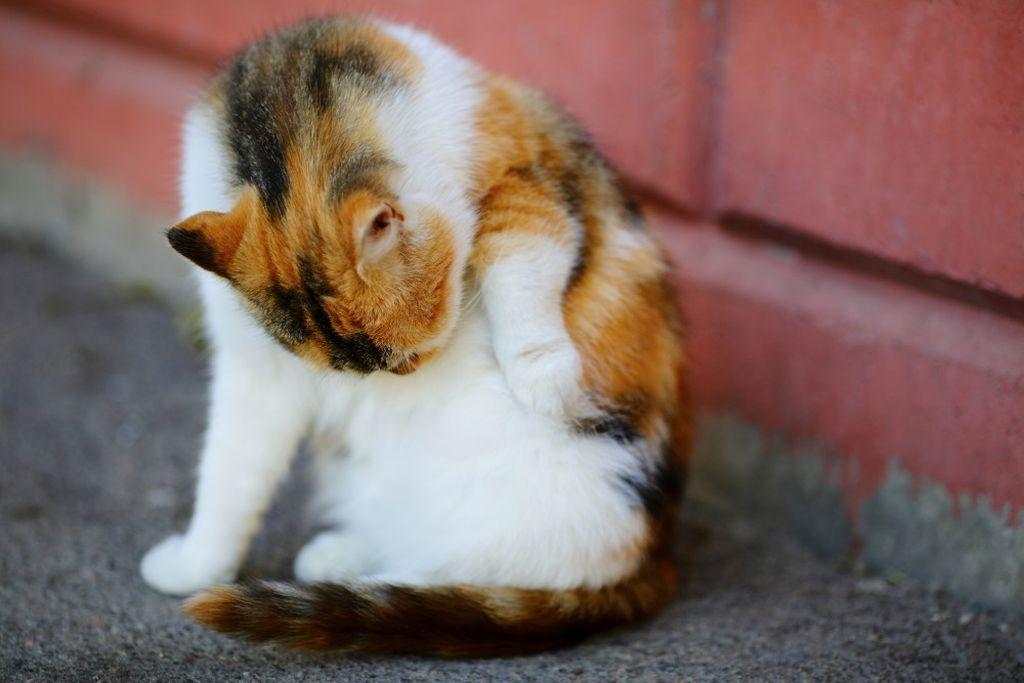 Все кошки вылизывают свою шерсть, поэтому мальтпаста показана практически всем породам