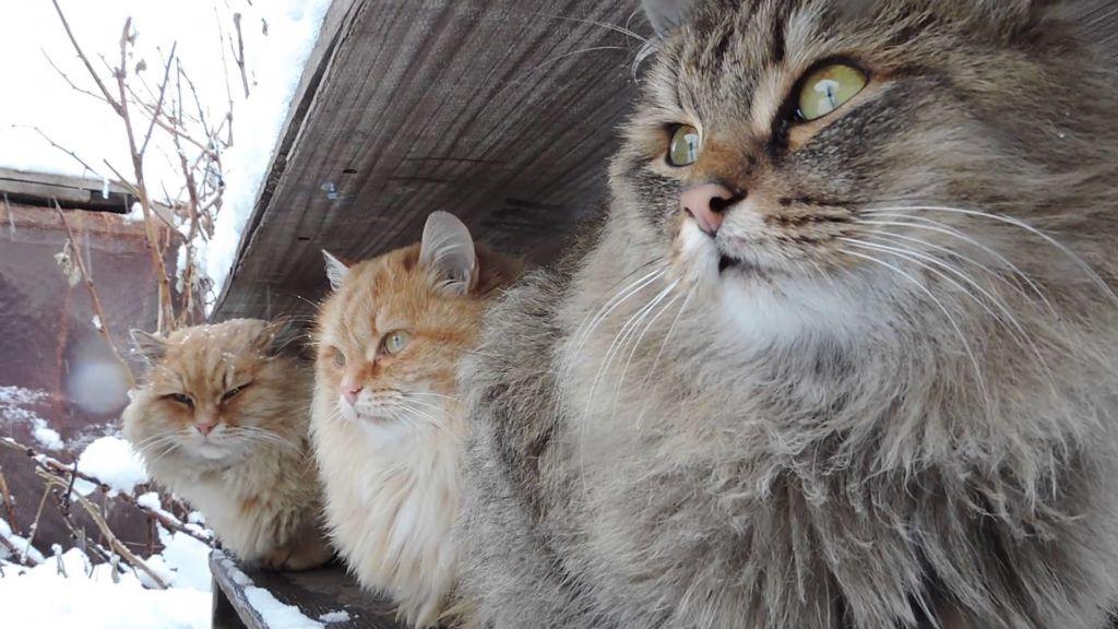 Регулярная вакцинация и правильный уход поможет кошкам быть здоровыми