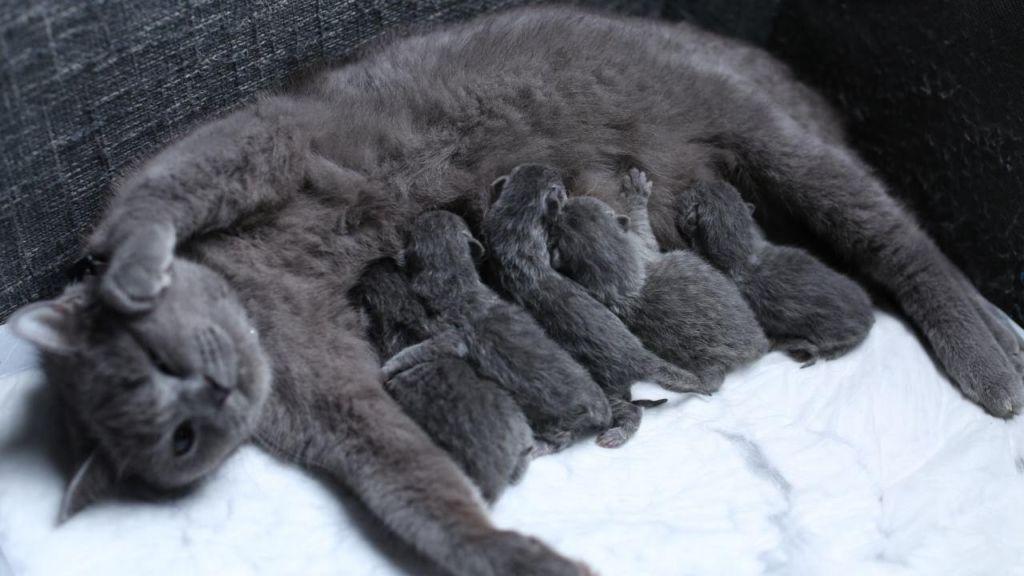Кошки могут выкармливать потомство самостоятельно