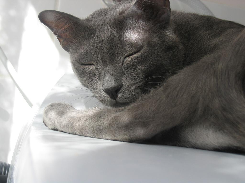Спящий корат