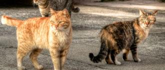 13 лучших короткошерстных пород кошек