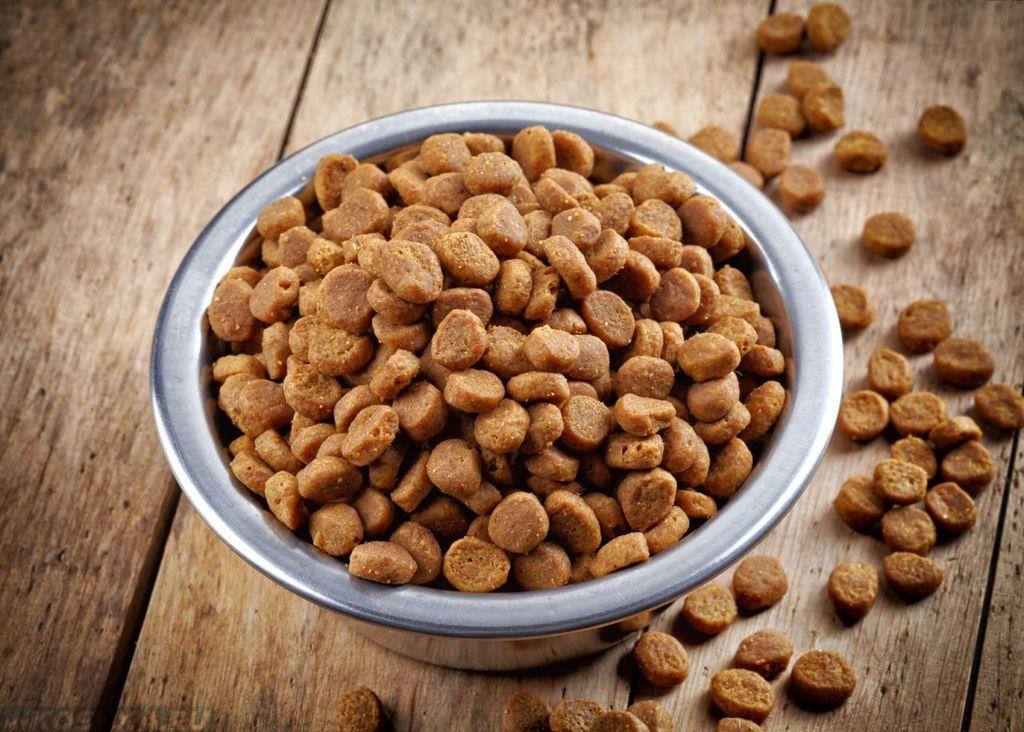 Для питания нужно выбирать качественный натуральный или сухой корм