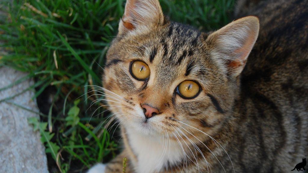 Коэффициент де Ритиса у кошек и собак является показателем, свидетельствующим о сердечных или печеночных патологиях