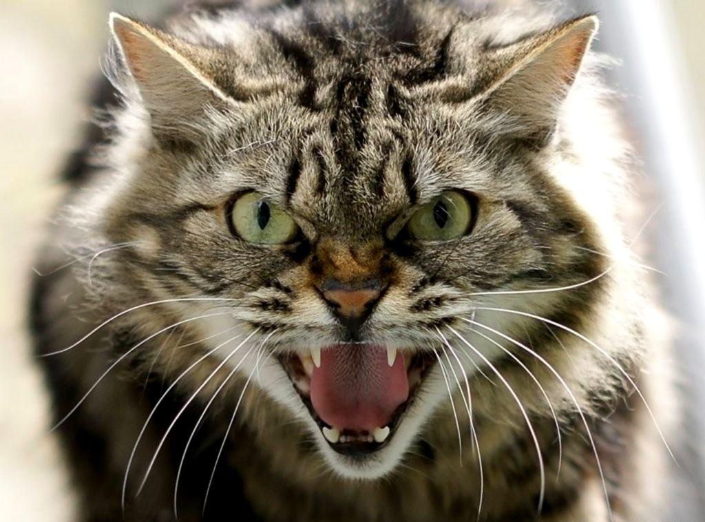 Прикольное фото мы злые коты
