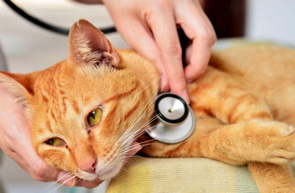 38 опасных болезней кошек — лечение и симптомы