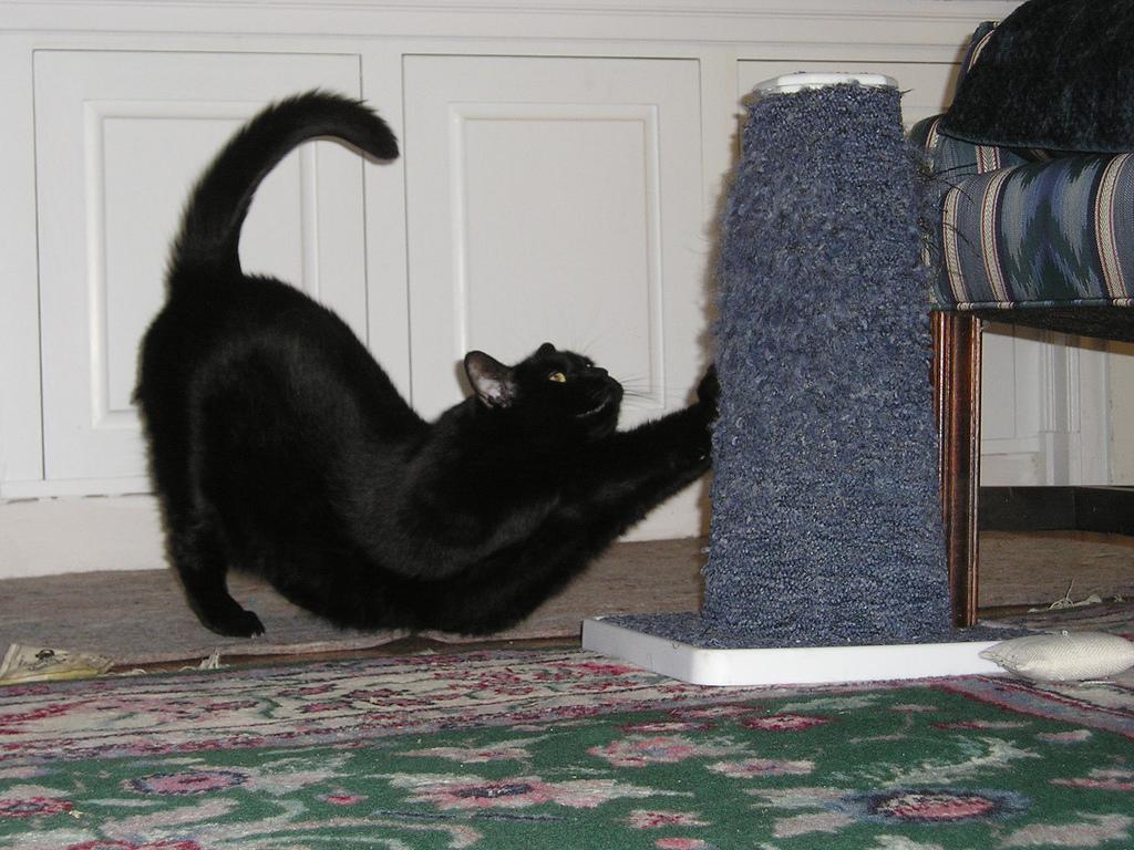 Когтеточка заменяет коту обои и диваны