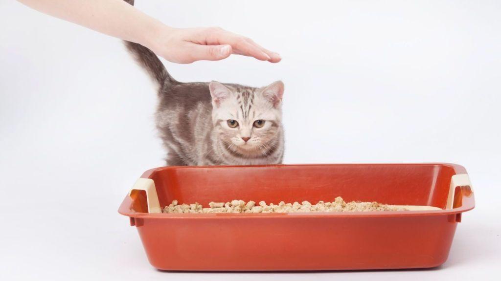 Как быстро приучить котенка к лотку в квартире