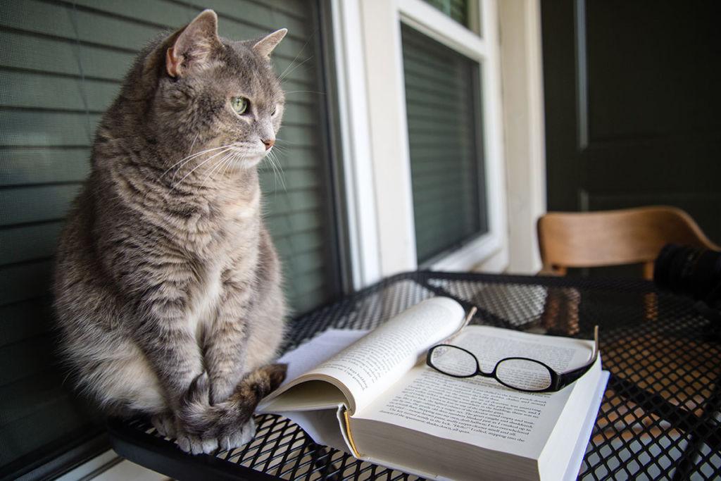 Читающий котик картинки