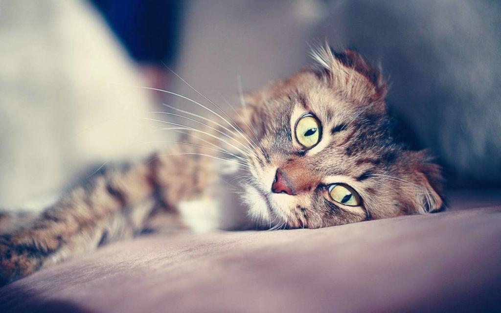 Соблюдайте рекомендации ветеринара при асците