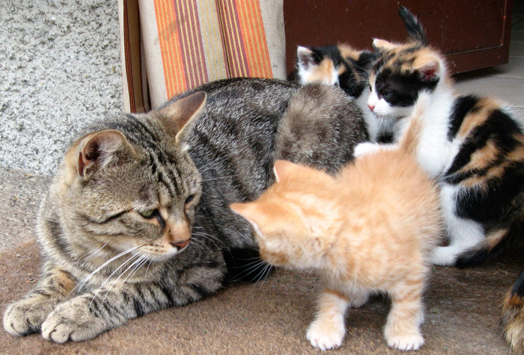 Котят обязательно отлучить от больной матери, иначе они тоже заболеют