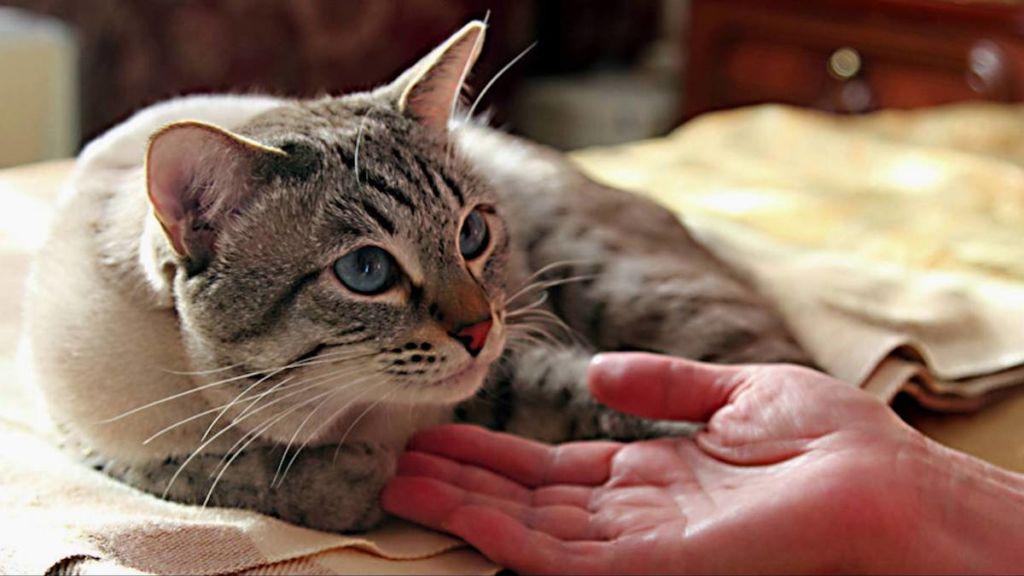 Предотвращение недержании мочи заключается в исполнении правил содержания и кормления кошки
