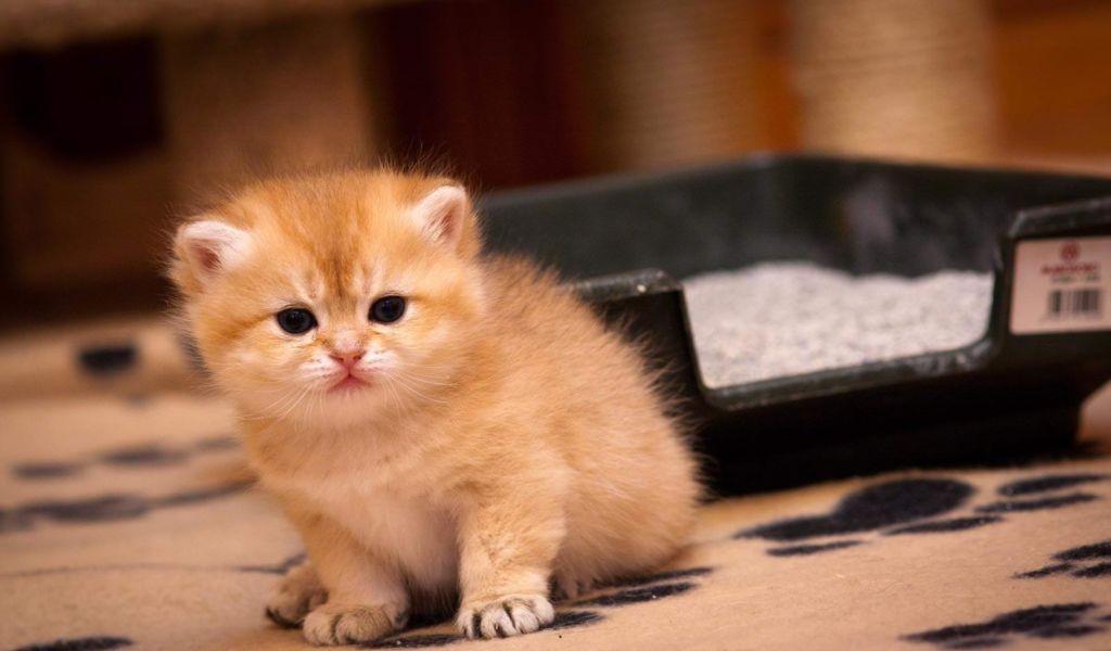 9 причин, почему кот или кошка часто писает и с кровью