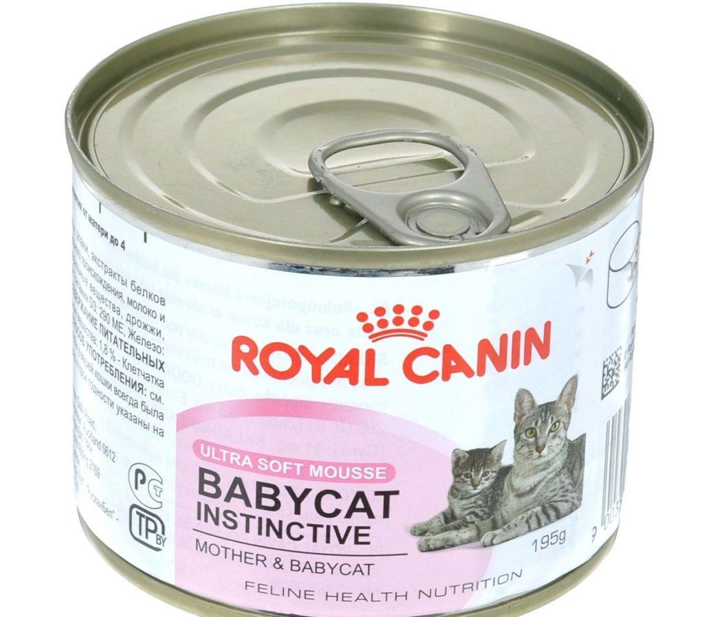 Как и чем правильно кормить котят в 1-6 месяцев