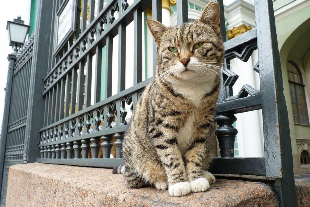 Со времен Елизаветы Петровны кошки стали неотъемлемой частью питерской дворцовой жизни