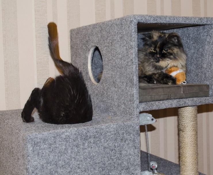 Готовый комплекс для двух кошек