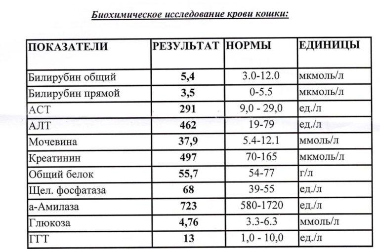 Если поел анализ крови биохимический цена анализ крови на cdt