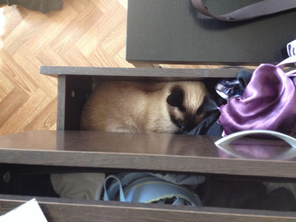 Прежде всего потерянную кошку нужно искать дома