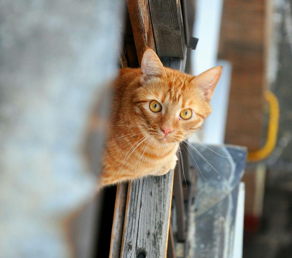 В многоквартирных домах кошки могут перепутать двери и забежать к соседям