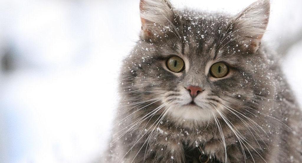 Считается, если черный кот переночует в доме, то изгонят все зло