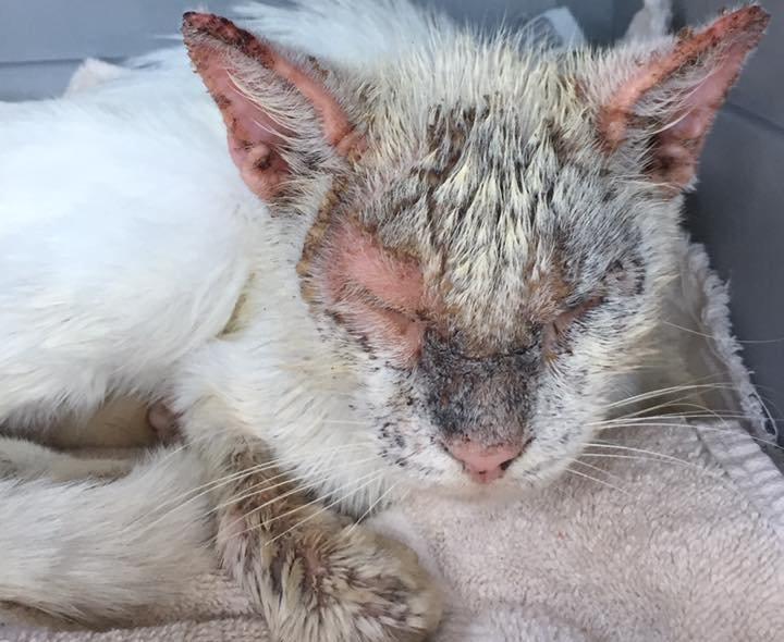 Люди, контактирующие с больным животным также могут начать чесаться