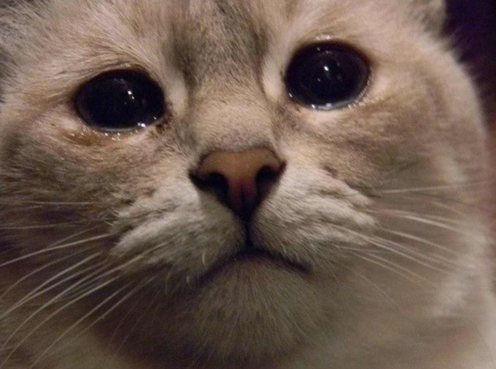 Картинка котик плачет