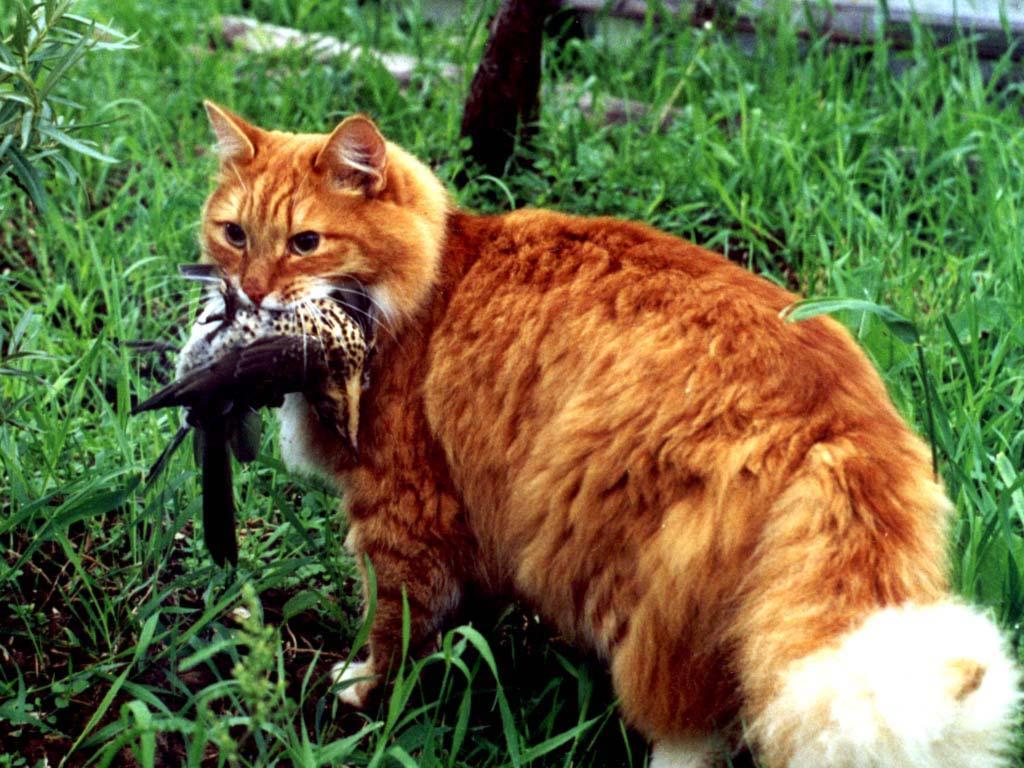 Основные симптомы и лечение отравления у кошек