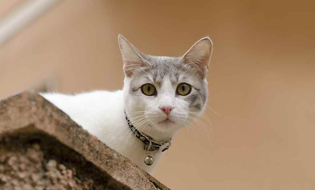Причины появления акне у кошки на подбородке и как лечить
