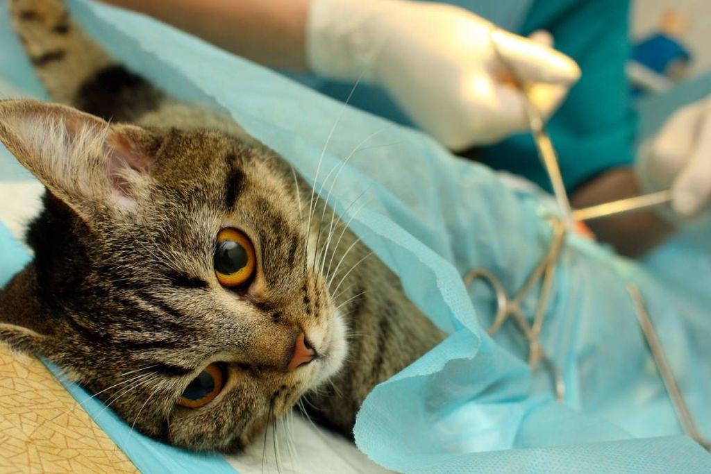 Цель операции – удаление проблемной части уретры