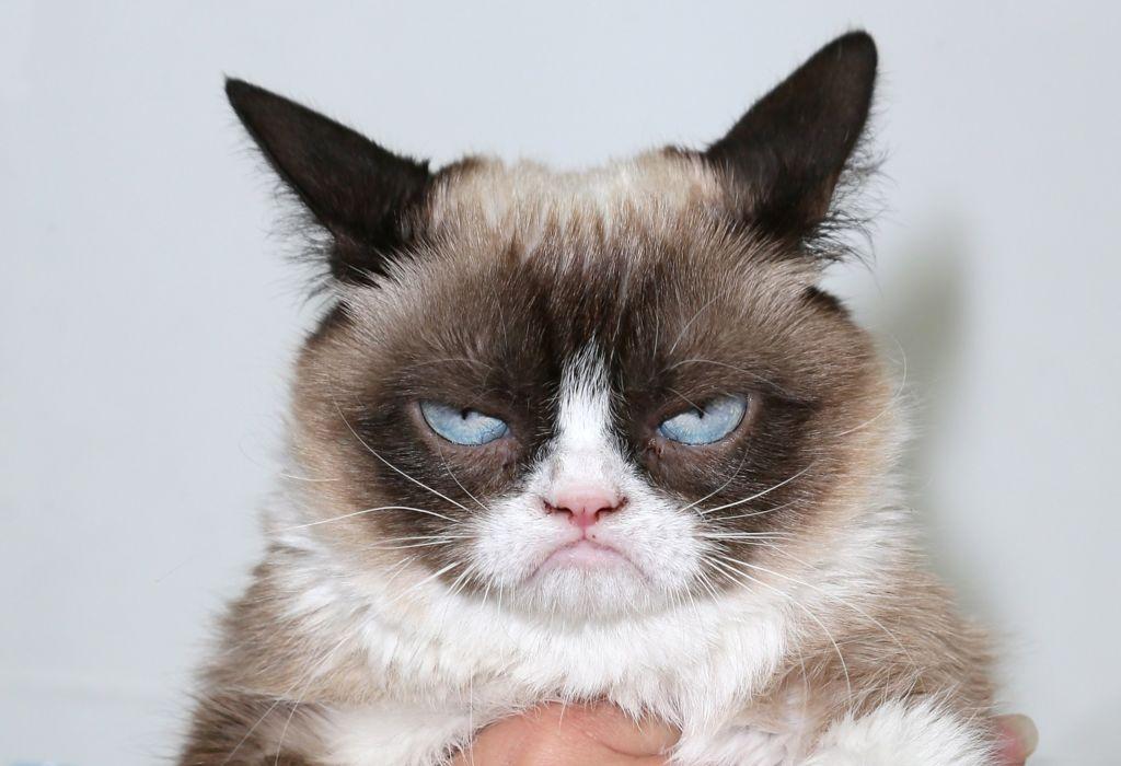 Самый недовольный кот Тард