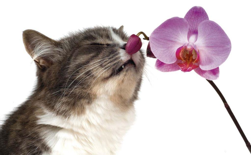 Чтобы отучить кота метить, нужно слегка бить его пальцами по морде