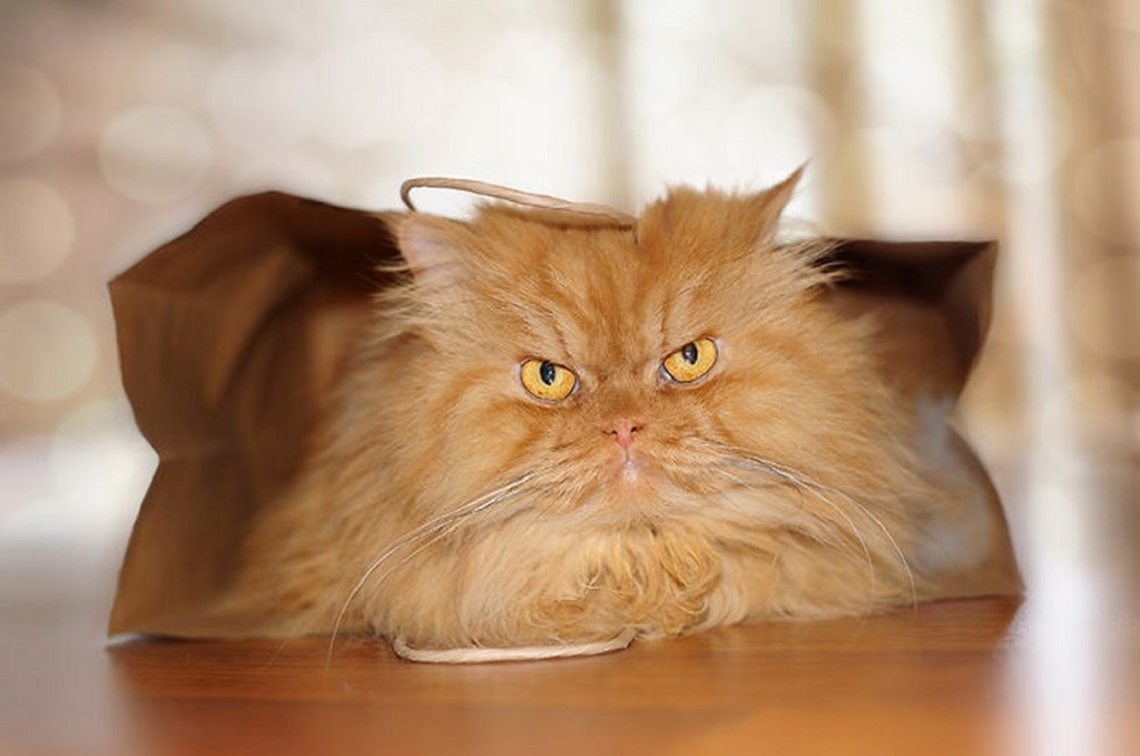 самый злой кот фото всему