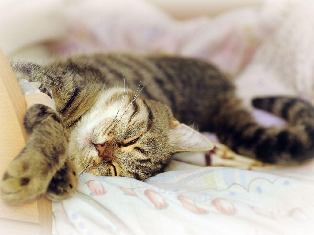 Прежде чем отучать кота гадить на пол, важно убедиться в его физическом и психологическом комфорте